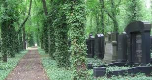 novy zidovsky hrbitov